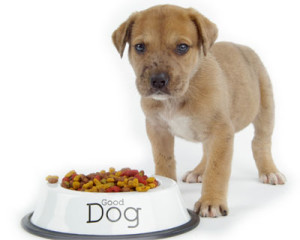 A patient puppy waits in front of a dish full of kibbles.